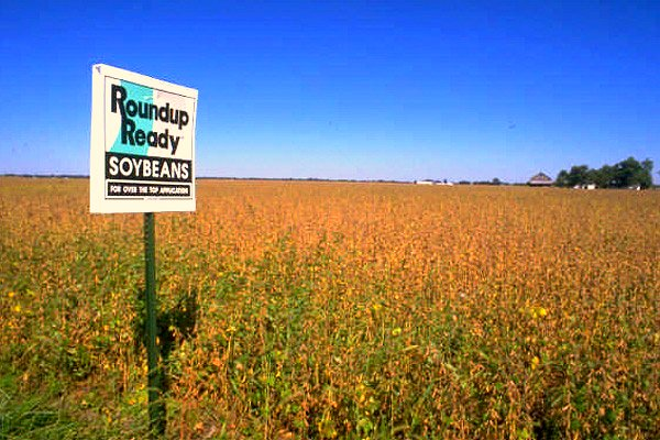 Sign «Round up ready soyabeans» in field of genetically engineered soyabeans.